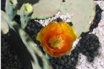 nsd-obledo-flower